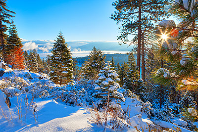 about tahoe management